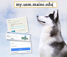 image of husky looking at the MyUSM login address