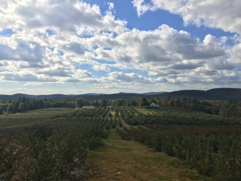 Apple Orchard- Libby and Sons