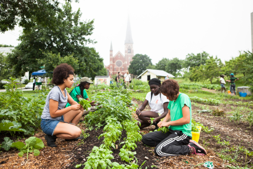 Cultivating Community's Youth Growers