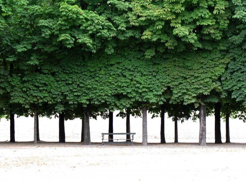 Tuileries Gardens, Paris 2011