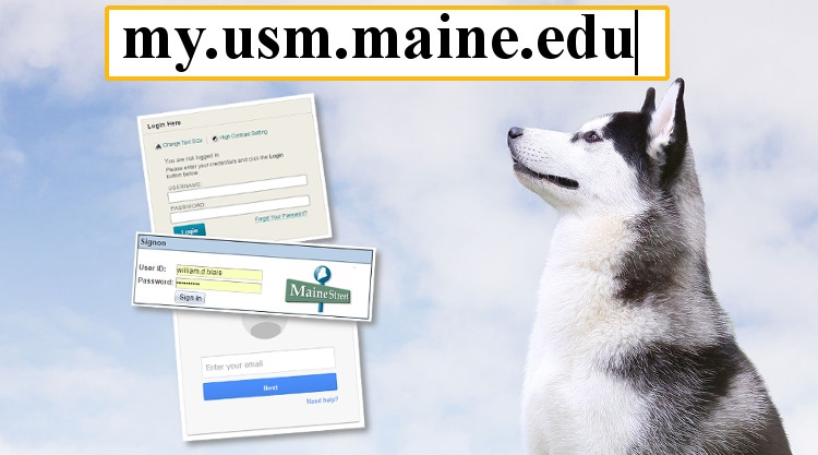 image of husky looking at MyUSM login address