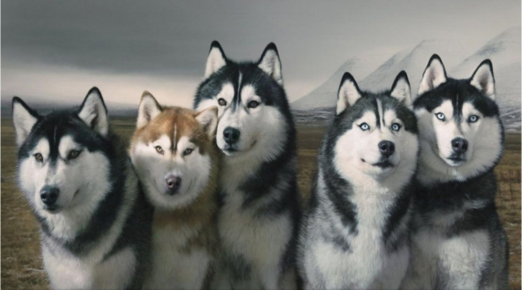 Husky Huddle Session