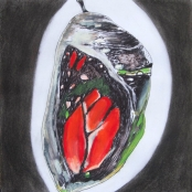 """""""Butterfly in Chrysalis"""", Drawing from ART 251"""