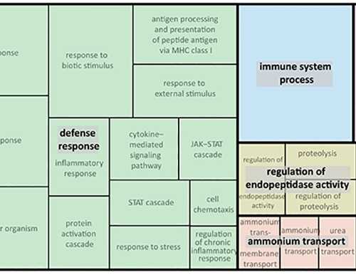 Figure 4. REVIGO Gene Ontology treemap of biological processes associated with the 408 genes upregulated by cortisol treatment in wild-type but not klf9-/- larvae