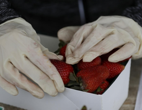 A vendor wearing rubber gloves packs strawberries at the Tustin farmers' market on Wednesday, March 18, 2020, in Tustin, CA. (Chris Carlson/Associated Press)