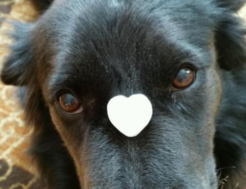Dog with heart on face