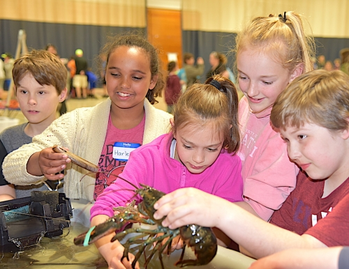 touch tank at water festival