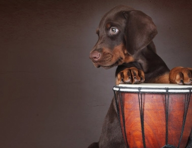 Dog with drum