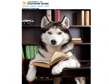 Husky dog in library, reading textbook
