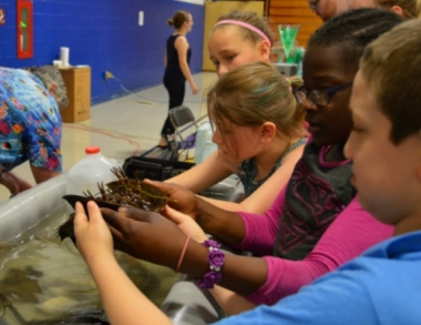 students holding a horseshoe crab