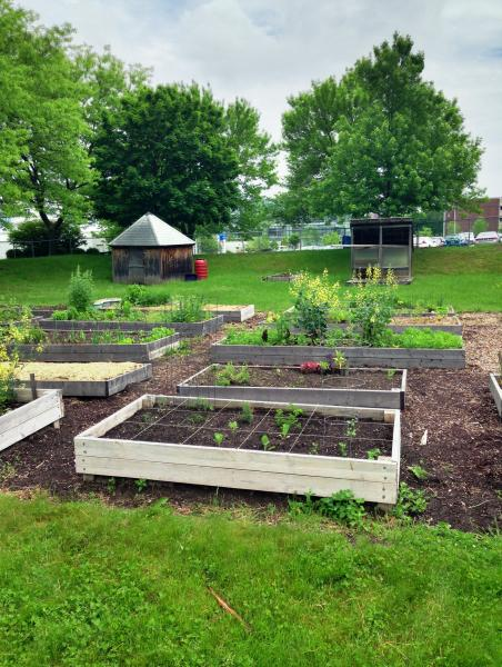 University of Southern Maine Community Garden in the summer