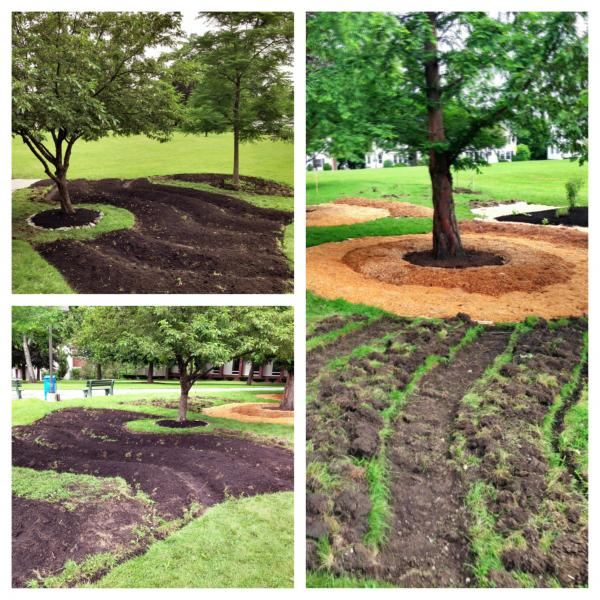 USM's Food forest permaculture installation, portland campus