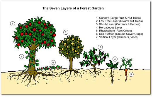 http://permaculturenews.org/2011/10/21/why-food-forests/